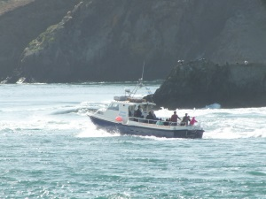 Boat trips around Ramsey Island, St Davids. Pembrokeshire