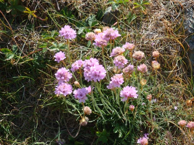 coastalflowers1_800