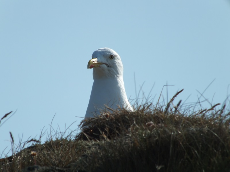 Keeping an eye on all - seagull St Davids Pembrokeshire Wales, booking conditions page